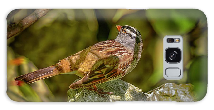 Animals Galaxy S8 Case featuring the photograph White Crowned Sparrow by LeeAnn McLaneGoetz McLaneGoetzStudioLLCcom