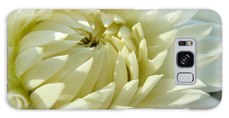 Dahlia Galaxy S8 Case featuring the photograph White Dahlia Flower Art Prints Dahlia Giclee Baslee Troutman by Baslee Troutman