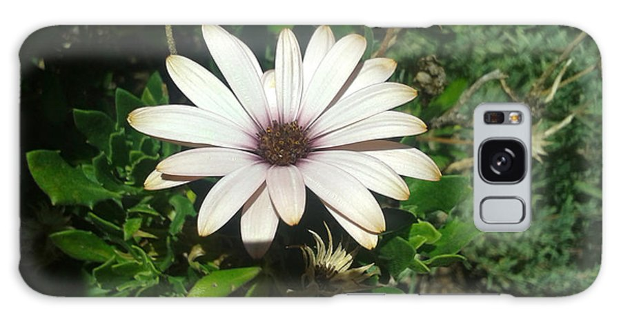 Daisy Galaxy S8 Case featuring the photograph White Daisy by William Goodson