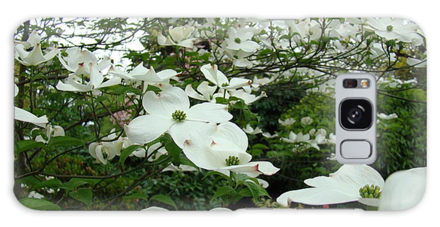 Dogwood Galaxy S8 Case featuring the photograph White Dogwood Flowers 6 Dogwood Tree Flowers Art Prints Baslee Troutman by Baslee Troutman