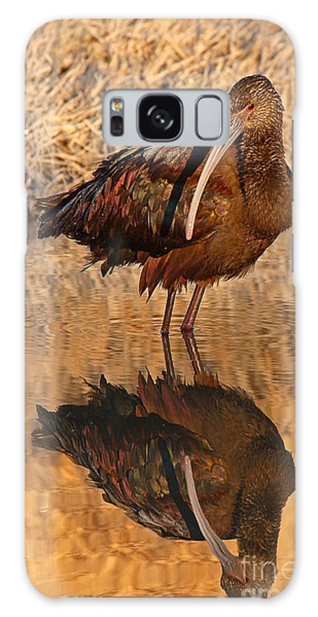 Ibis Galaxy S8 Case featuring the photograph White-faced Ibis Reflecting On Late Spring Morning by Max Allen