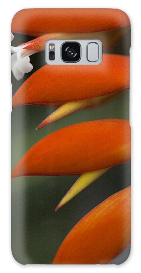 Heliconia Galaxy S8 Case featuring the photograph White Flower And Orange by Karen Ulvestad