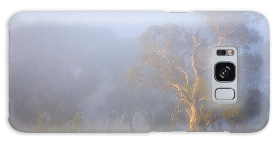 Tree Galaxy Case featuring the photograph White Gum Morning by Mike Dawson