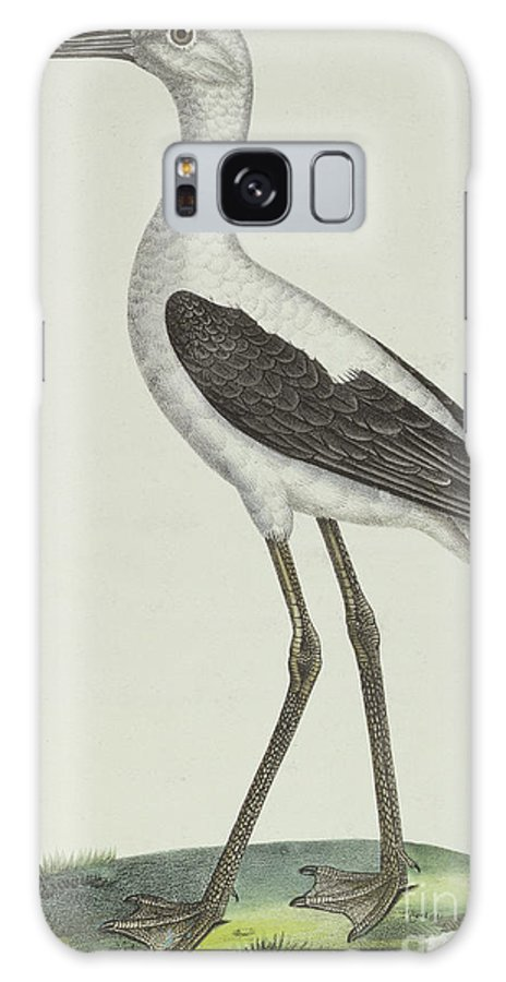 Avocet Galaxy S8 Case featuring the drawing White Headed Avocet by Paul Louis Oudart