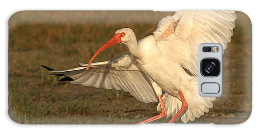 Ibis Galaxy S8 Case featuring the photograph White Ibis Landing Upon Ground by Max Allen