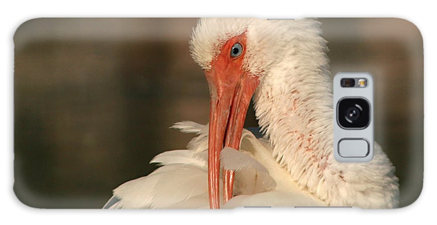 Ibis Galaxy S8 Case featuring the photograph White Ibis Placid Preening by Max Allen