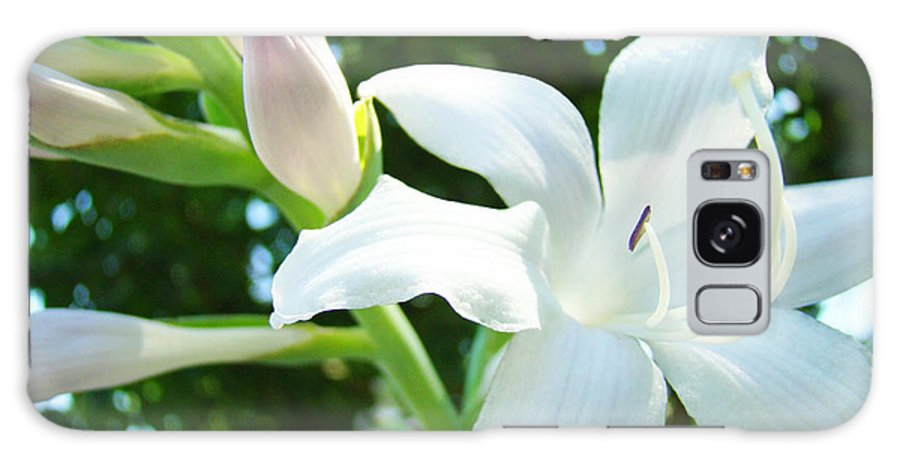 Lilies Galaxy S8 Case featuring the photograph White Lily Flowers Art Prints Lilies Giclee Baslee Troutman by Baslee Troutman
