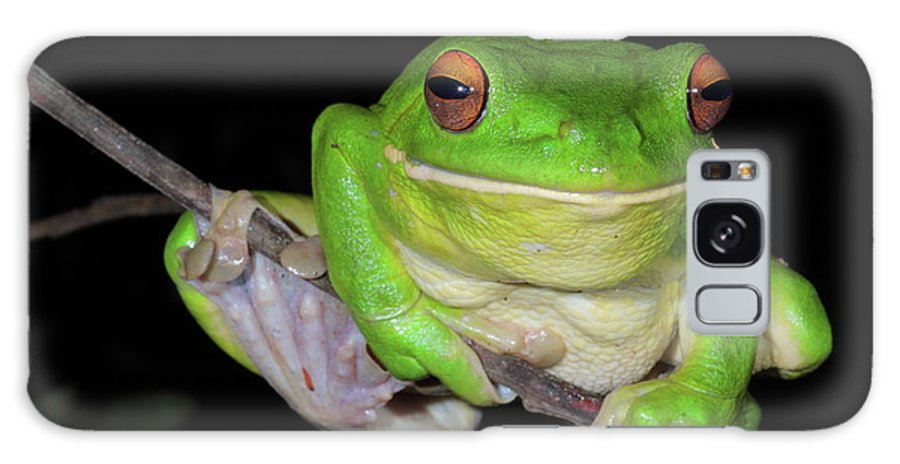 Frog Galaxy S8 Case featuring the photograph White-lipped Tree Frog by Bruce J Robinson