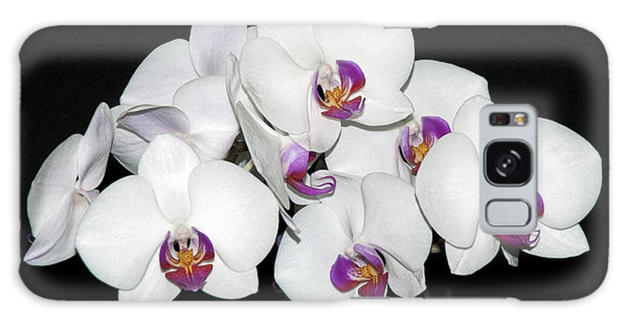 White Orchid Galaxy S8 Case featuring the photograph White Orchid by Robert Shard