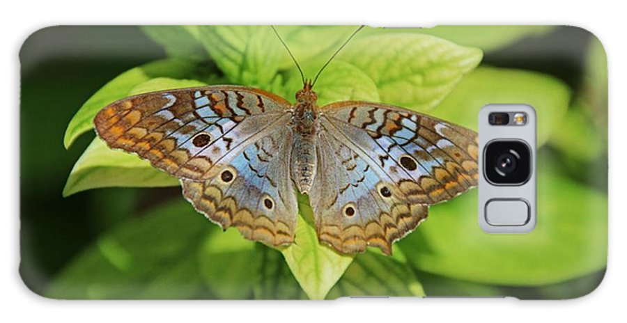 White Peacock Galaxy S8 Case featuring the photograph White Peacock Butterfly I by Michiale Schneider