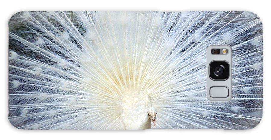 Albino Galaxy S8 Case featuring the photograph White Peacock by Rita Ariyoshi - Printscapes