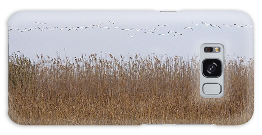 White Pelicans On Lake Galaxy S8 Case featuring the photograph White Pelicans Fly Over Reed Bed On Lake by Cliff Norton