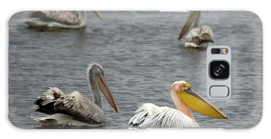 White Pelicans On Lake Galaxy S8 Case featuring the photograph White Pelicans On Lake by Cliff Norton