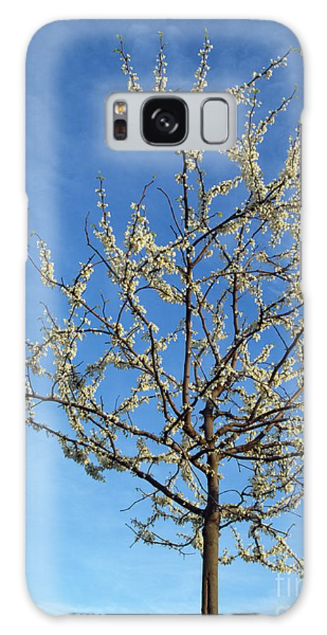 Flower Galaxy S8 Case featuring the photograph White Redbud Tree In May by Anna Lisa Yoder