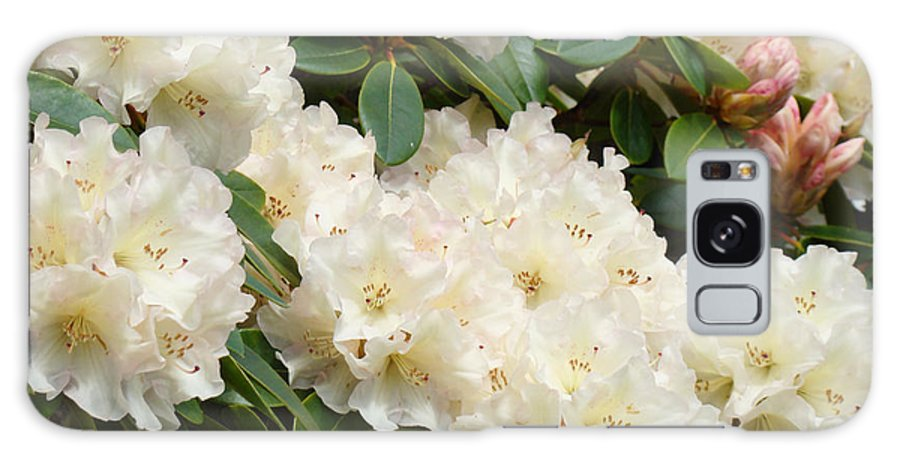 Rhodie Galaxy S8 Case featuring the photograph White Rhodies Landscape Floral Art Prints Canvas Baslee Troutman by Baslee Troutman