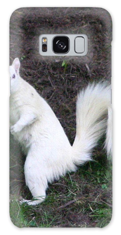 Squirrel Galaxy S8 Case featuring the photograph White Squirrel by Robert E Alter Reflections of Infinity
