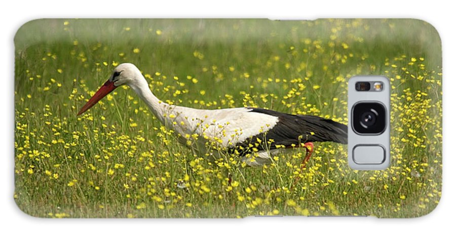 White Storks Galaxy S8 Case featuring the photograph White Stork Looking For Frogs by Cliff Norton