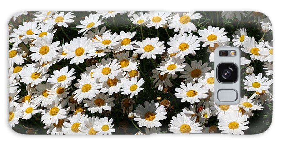White Galaxy S8 Case featuring the photograph White Summer Daisies by Christine Till