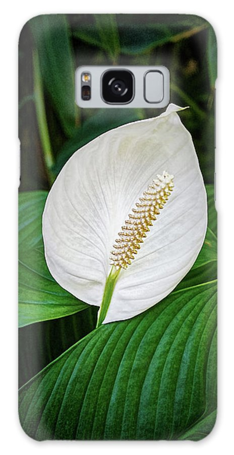 Tail Flower Galaxy S8 Case featuring the photograph White Tail-flower by Kenneth Roberts