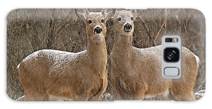 Deer Galaxy Case featuring the photograph White-tailed Deer Pair Peering Out From Snowstorm by Max Allen