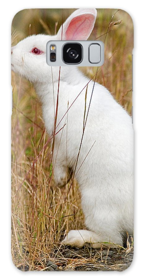 Rabbit Galaxy S8 Case featuring the photograph White Wabbit by Randall Ingalls