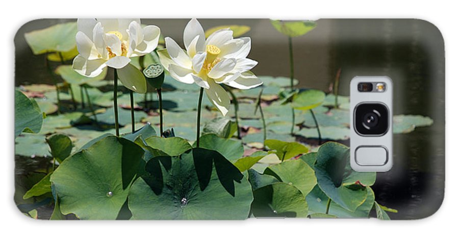 Waterlily Galaxy S8 Case featuring the photograph White Waterlilies by Mark Wiley