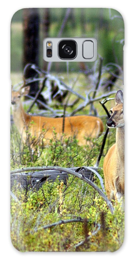 Deer Galaxy S8 Case featuring the photograph Whitetails by Marty Koch