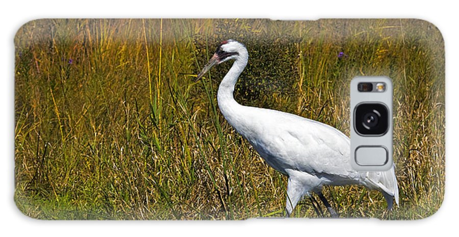 whooping Crane Galaxy Case featuring the photograph Whooping Crane by Al Mueller