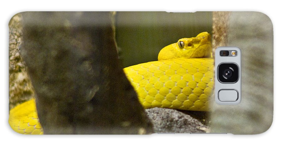 Yellow Galaxy S8 Case featuring the photograph Wicked Snake by Douglas Barnett