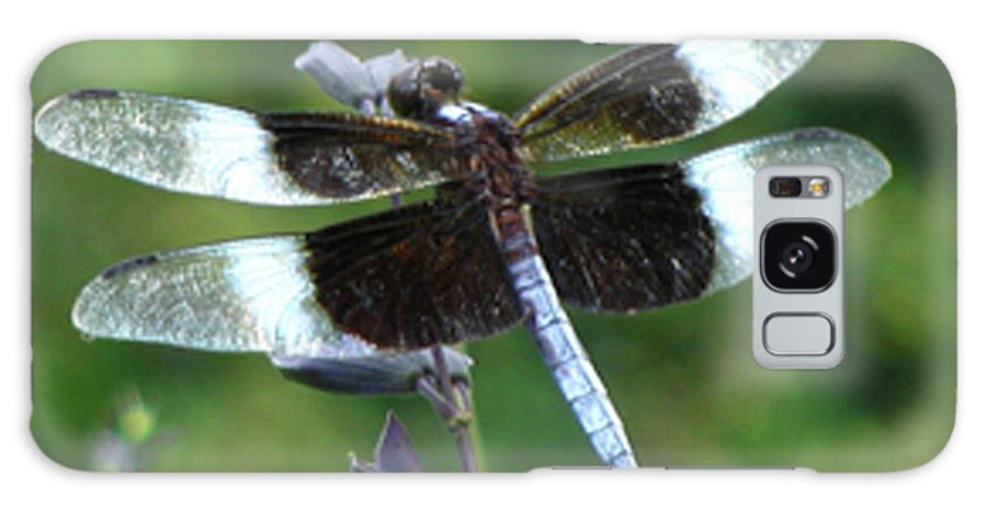 Insect Galaxy S8 Case featuring the photograph Widow Skimmer Dragonfly by Donna Brown