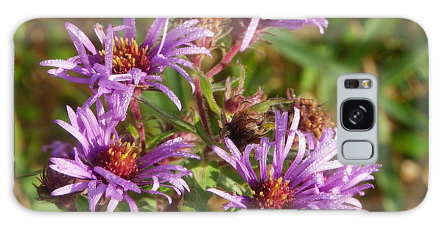 Nature Galaxy S8 Case featuring the photograph Wild Asters by Peggy King