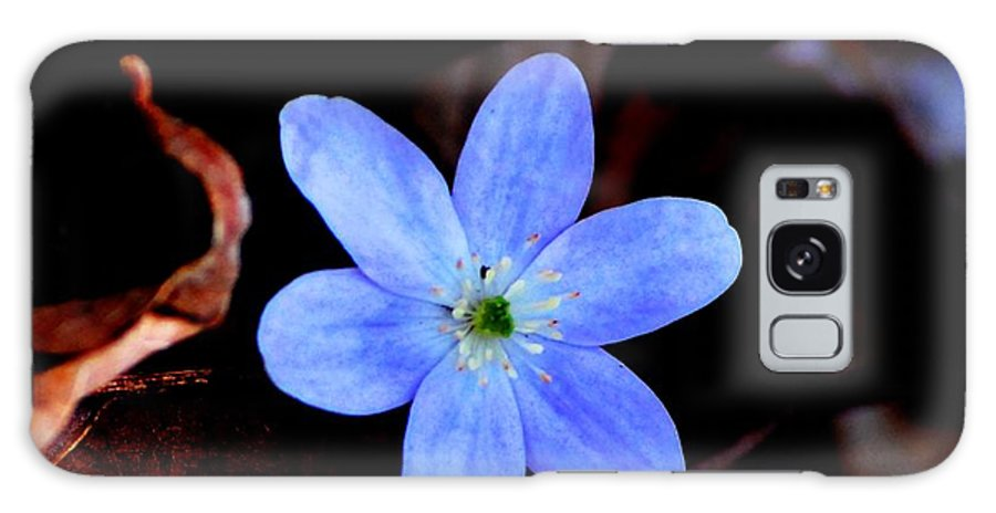 Digital Photo Galaxy Case featuring the photograph Wild Blue by David Lane