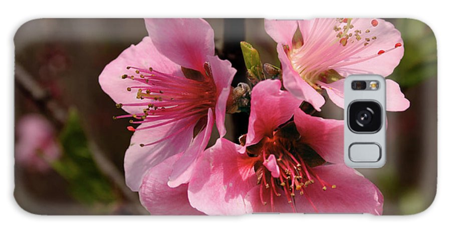 Cherry Galaxy S8 Case featuring the photograph Wild Cherry Blossom by Grant Groberg