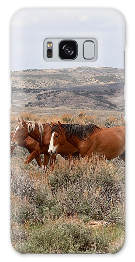 Horse Galaxy Case featuring the photograph Wild Horse Trio by Max Allen
