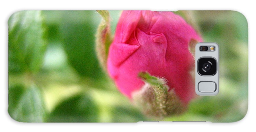 Rose Galaxy S8 Case featuring the photograph Wild Rose Bud by Melissa Parks