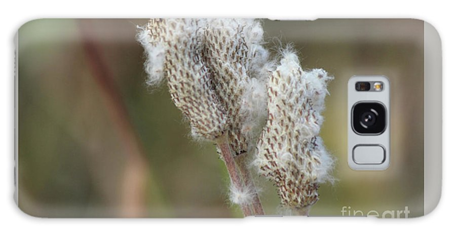 Anemone Galaxy S8 Case featuring the photograph Wild Seed by Ann E Robson
