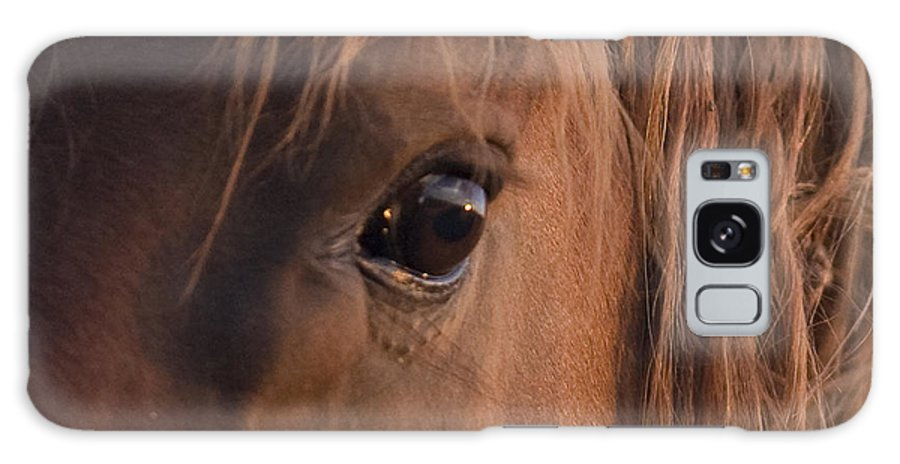 Horse Galaxy S8 Case featuring the photograph Wild Stallion's Eye by Carol Walker