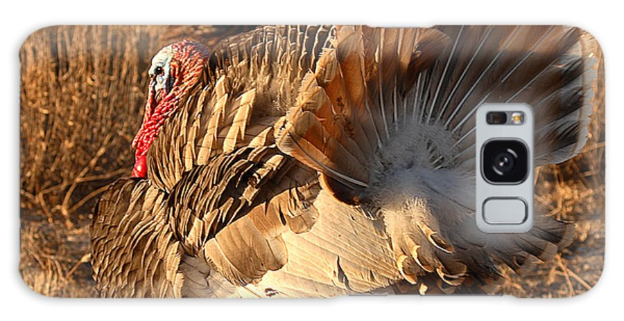 Turkey Galaxy S8 Case featuring the photograph Wild Turkey Tom Following Hens by Max Allen