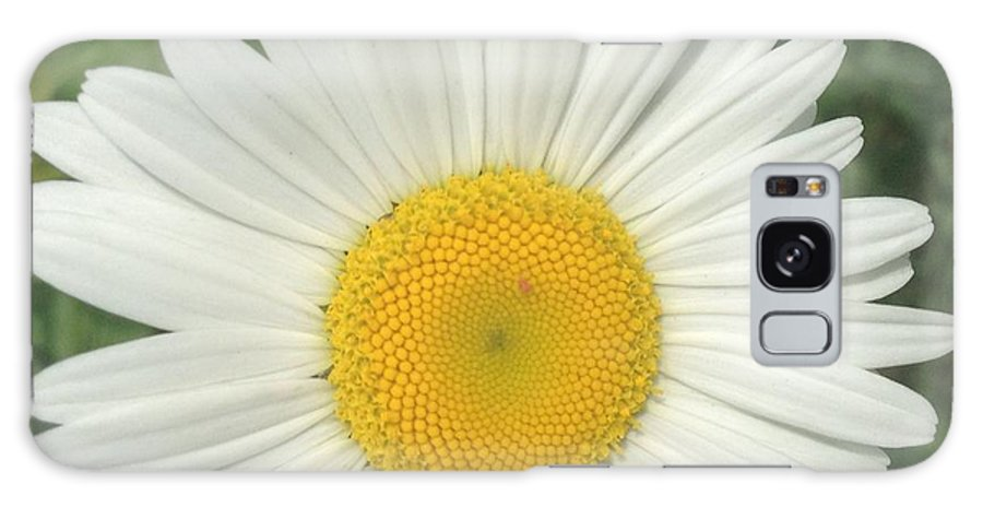 Wild White Daisy Galaxy S8 Case featuring the photograph Wilddaisy by Francois Cusson