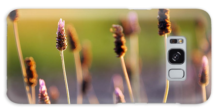 Nature Galaxy S8 Case featuring the photograph Wildflower 2 by Jill Reger