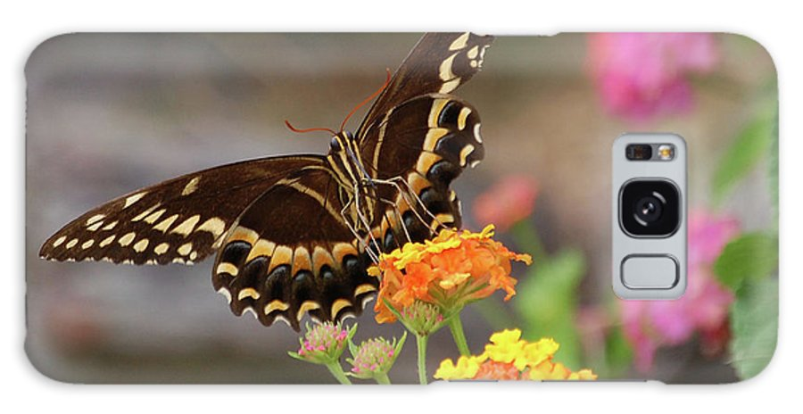 Butterfly Galaxy S8 Case featuring the digital art Wildflower Swallowtail by DigiArt Diaries by Vicky B Fuller