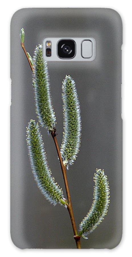 Lehtokukka Galaxy S8 Case featuring the photograph Willow by Jouko Lehto