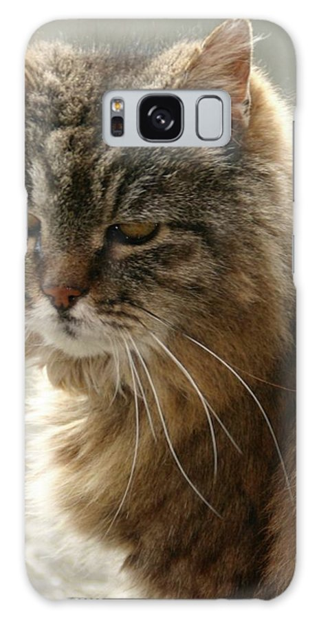 Cat Galaxy S8 Case featuring the photograph Willow by Martina Fagan