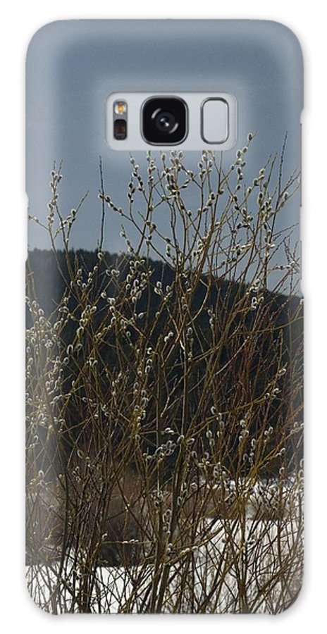 Branches Galaxy S8 Case featuring the photograph Willows In Snow by Sara Stevenson