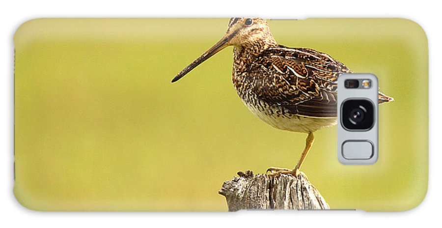 Snipe Galaxy S8 Case featuring the photograph Wilson's Snipe On Morning Perch by Max Allen