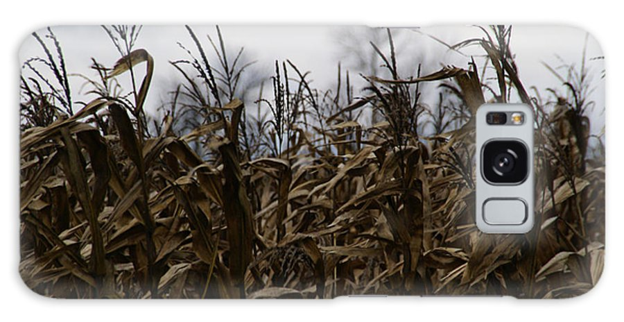 Corn Galaxy S8 Case featuring the photograph Wind Blown by Linda Shafer