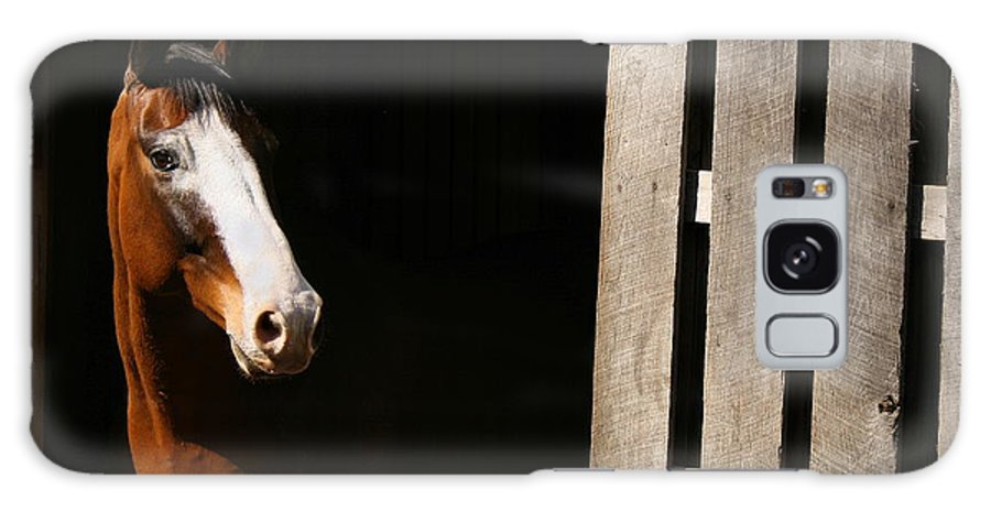 Horse Galaxy S8 Case featuring the photograph Window by Angela Rath