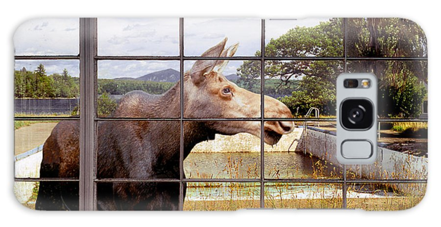 Moose Galaxy Case featuring the photograph Window - Moosehead Lake by Peter J Sucy