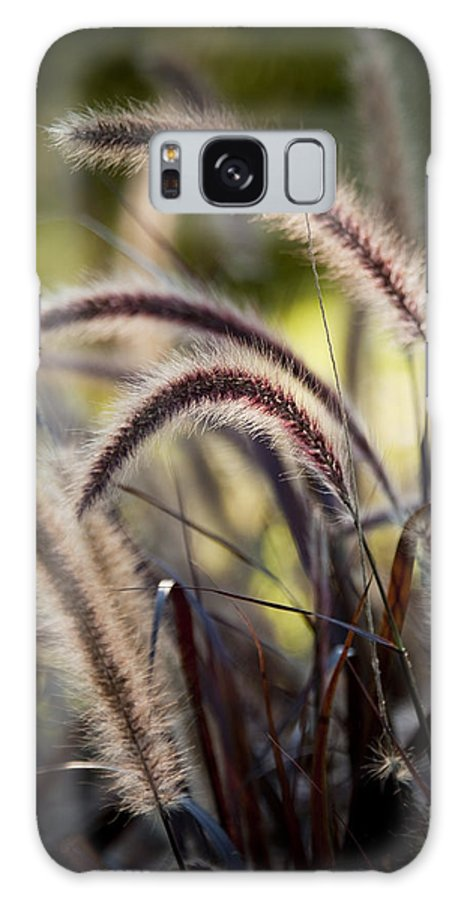 Wild Grass Galaxy S8 Case featuring the photograph Windy Grass by Chad Davis