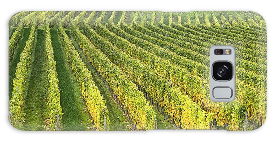 Heiko Galaxy S8 Case featuring the photograph Wine Growing by Heiko Koehrer-Wagner